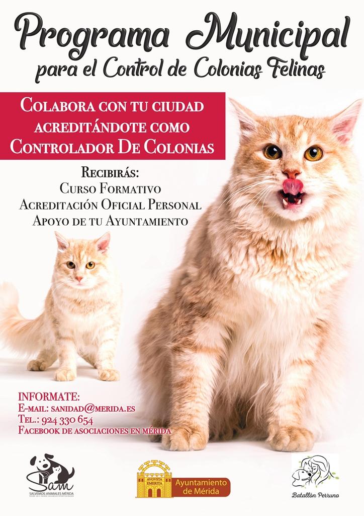 control-colonias-felinas-cartel