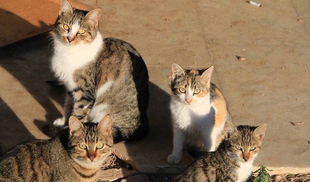 El Ayuntamiento de Mérida hace un llamamiento a los ciudadanos para el control y protección de colonias felinas