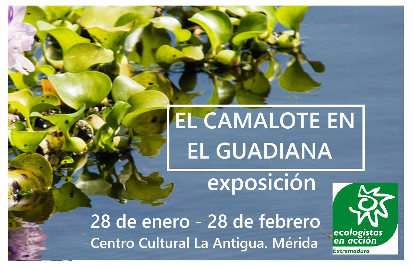 camalote-antigua-cartel