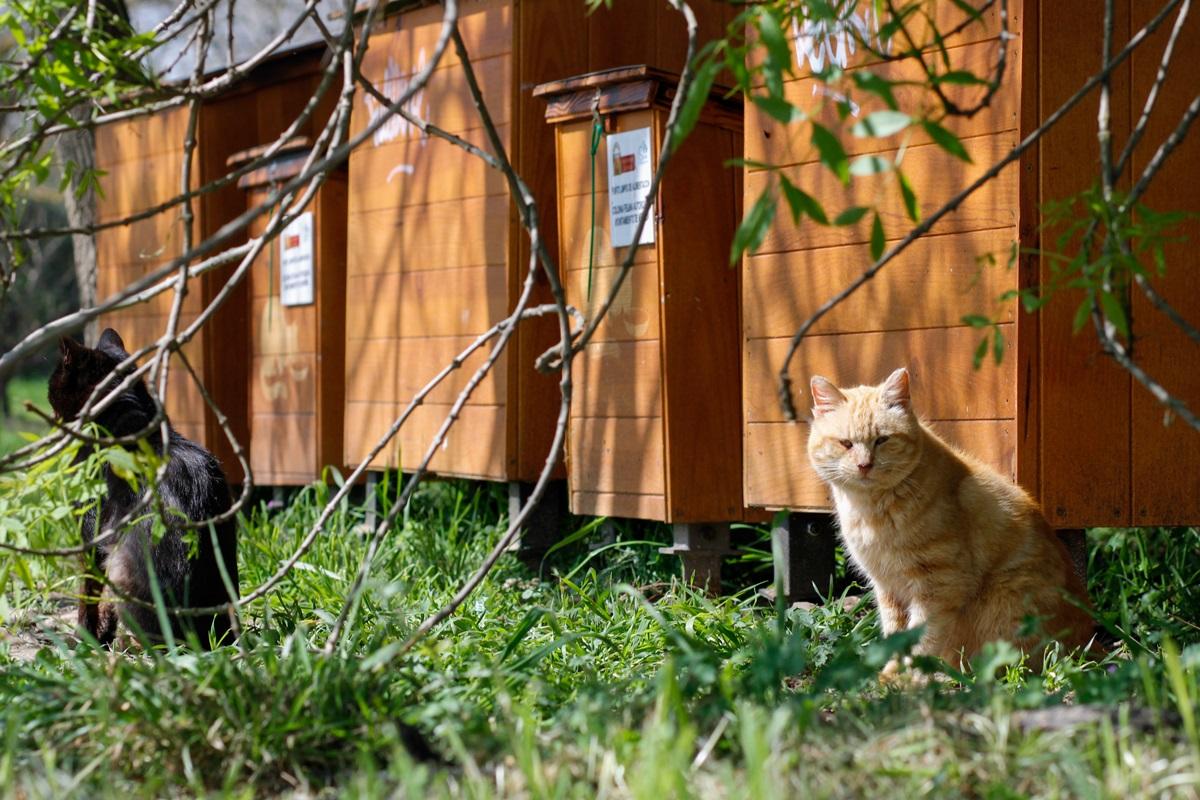 Colonia felina en Isla del Guadiana 2
